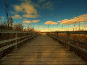Marsh Path by Irene Suchocki