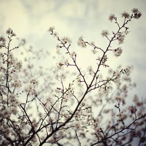 Meadow Bloom by Irene Suchocki