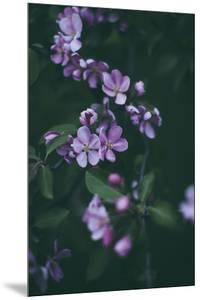 Midnight Bloom by Irene Suchocki
