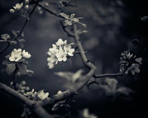 Midnight Garden I by Irene Suchocki