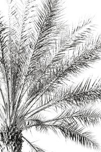 Palm Breeze Noir by Irene Suchocki