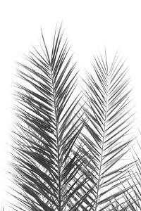 Palm Crisp Noir by Irene Suchocki