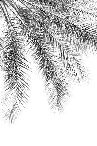 Palm Grace Noir by Irene Suchocki