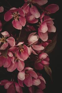 Powerful Petals by Irene Suchocki