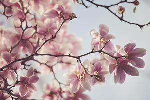 Spring Bloom by Irene Suchocki
