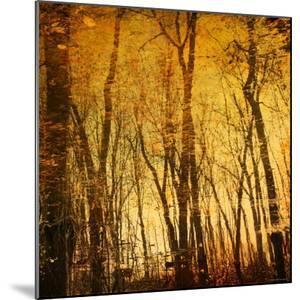 Tree Reflections by Irene Suchocki