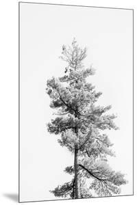 Tree Tops - Solo by Irene Suchocki