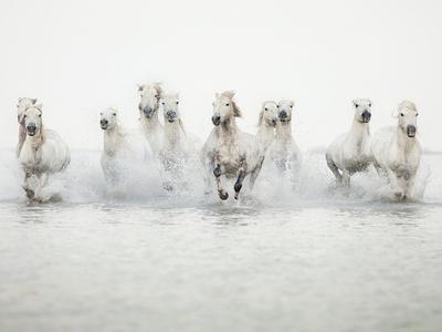 White Horses I