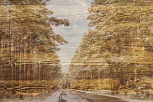 Double Exposure Trees on A Wooden Board Texture by Irina Jesikova