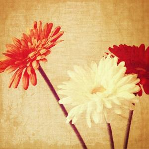 Art Floral Vintage Background with Red and White Gerbera in Sepia by Irina QQQ