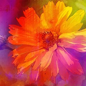Art Floral Vintage Rainbow Background with Asters by Irina QQQ