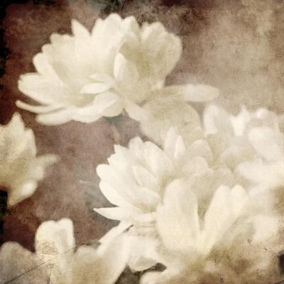 Art Floral Vintage Sepia Background with White Asters