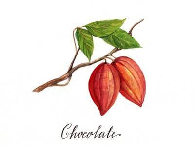 Chocolate by Irina Trzaskos Studio