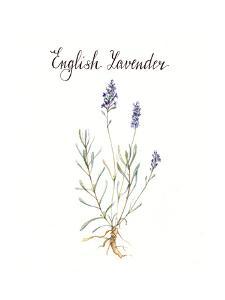 Lavender by Irina Trzaskos Studio