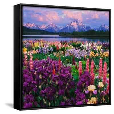 Iris and Lupine Garden and Teton Range at Oxbow Bend, Wyoming, USA-Adam Jones-Framed Canvas Print