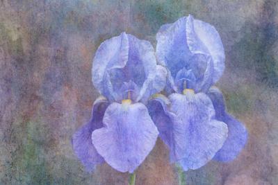 https://imgc.artprintimages.com/img/print/iris-blue-rhythm_u-l-q12uagw0.jpg?p=0