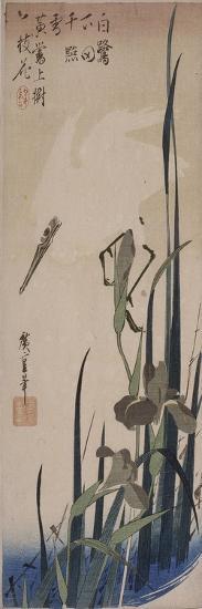 Iris et héron blanc-Ando Hiroshige-Giclee Print
