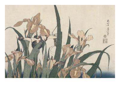Iris et sauterelle-Katsushika Hokusai-Giclee Print