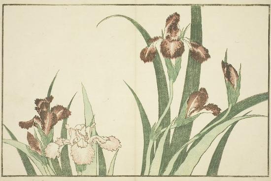 Iris, from the Picture Book of Realistic Paintings of Hokusai (Hokusai Shashin Gafu), C.1814-Katsushika Hokusai-Giclee Print