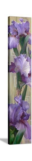 Iris II-Jan McLaughlin-Stretched Canvas Print