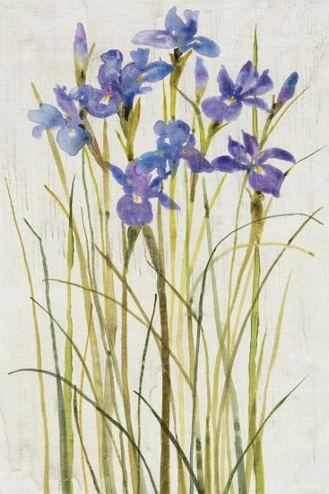 Iris Patch I-Tim OToole-Art Print
