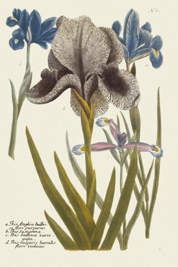 Iris Resplendant IV-Joseph Weinmann-Art Print