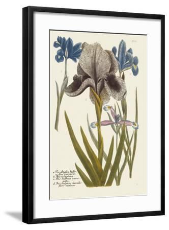Iris Resplendant IV-Joseph Weinmann-Framed Art Print