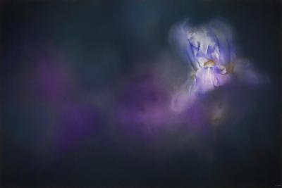 Iris Whisper-Jai Johnson-Giclee Print