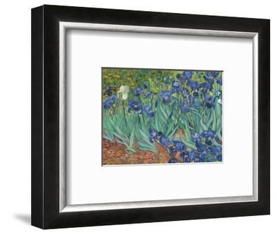 Irises, 1889-Vincent van Gogh-Framed Art Print