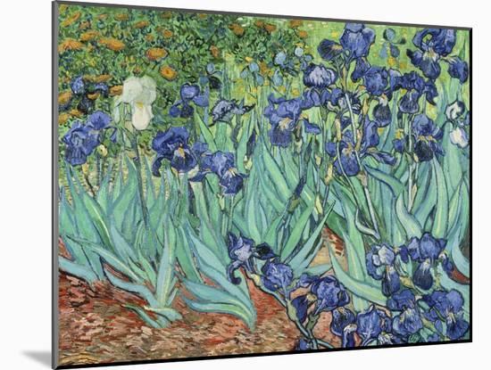 Irises, 1889-Vincent van Gogh-Mounted Giclee Print