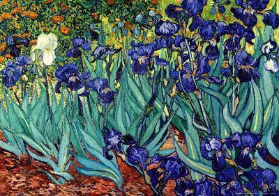 Irises, Saint-Remy, c.1889-Vincent van Gogh-Art Print