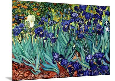 Irises, Saint-Remy, c.1889-Vincent van Gogh-Mounted Print