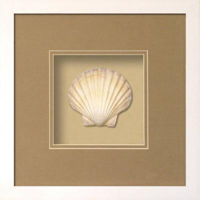 Irish Deep Shell Shadowbox - Sand