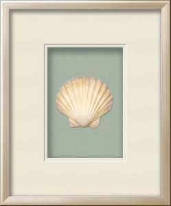 Irish Deep Shell Shadowbox - Seafoam