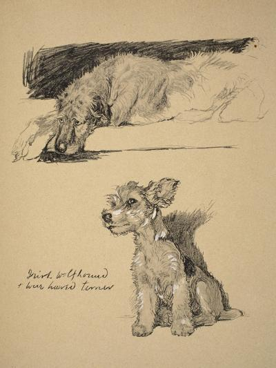 Irish Wolfhound and Wire-Haired Terrier, 1930, Just Among Friends, Aldin, Cecil Charles Windsor-Cecil Aldin-Giclee Print
