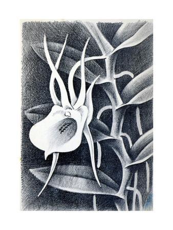 Angraecum, 1948