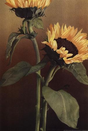 https://imgc.artprintimages.com/img/print/isabell-s-garden-ii_u-l-f8uskj0.jpg?p=0