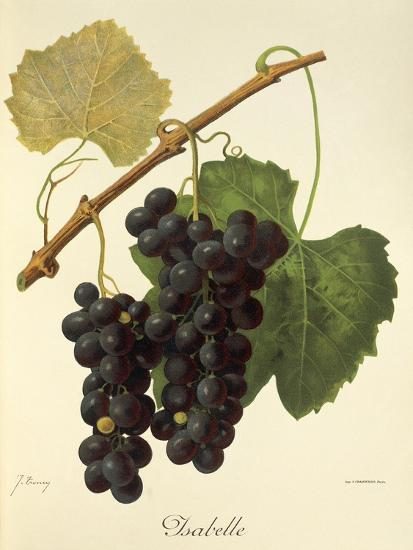 Isabelle Grape-J. Troncy-Giclee Print