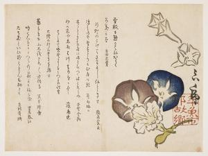 Morning Glories, C.1830 by ?ishi Matora