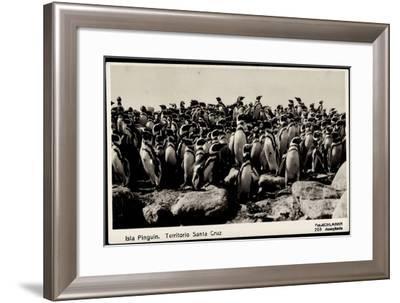 Isla Pinguin, Territorio Santa Cruz, Ansammlung Von Pinguinen--Framed Giclee Print