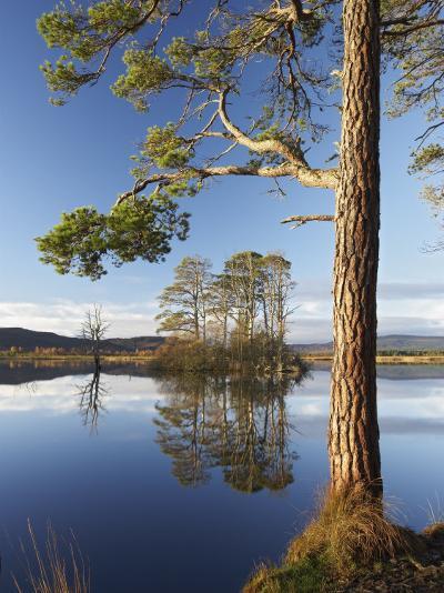 Island of Scots Pines Reflected in Loch Mallachie, Scotland-Mark Hamblin-Photographic Print