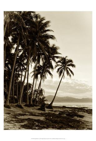https://imgc.artprintimages.com/img/print/island-palms-i_u-l-f97ojm0.jpg?p=0