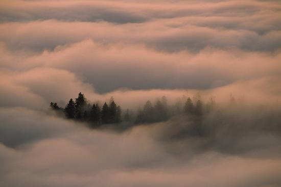 Islands of Trees Peaking Out of Thick Layer of Clouds in the Valley-Norbert Rosing-Photographic Print