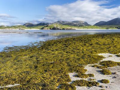 Isle of Lewis, the Uig Bay (Traigh Uuige) with Bladder Wrack. Scotland-Martin Zwick-Photographic Print