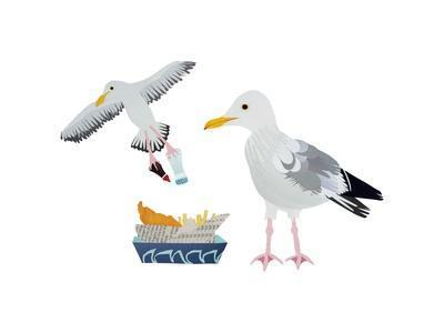 Seagulls, 2014