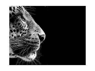 Isolated Leopard Face Card-Snap2Art-Art Print