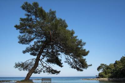 Tree At The Sea