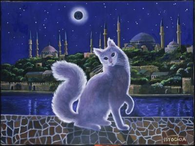 Angora Cat, Istanbul