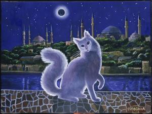 Angora Cat, Istanbul by Isy Ochoa