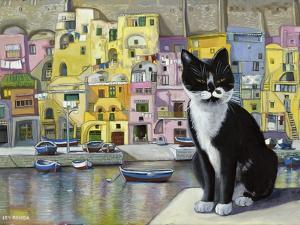 Cat in Corricella, Italy by Isy Ochoa